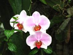 file:///C:/Dokumente%20und%20Einstellungen/Gaby%20Hollmann/Eigene%20Dateien/Lena%20Fong/orchid.jpg